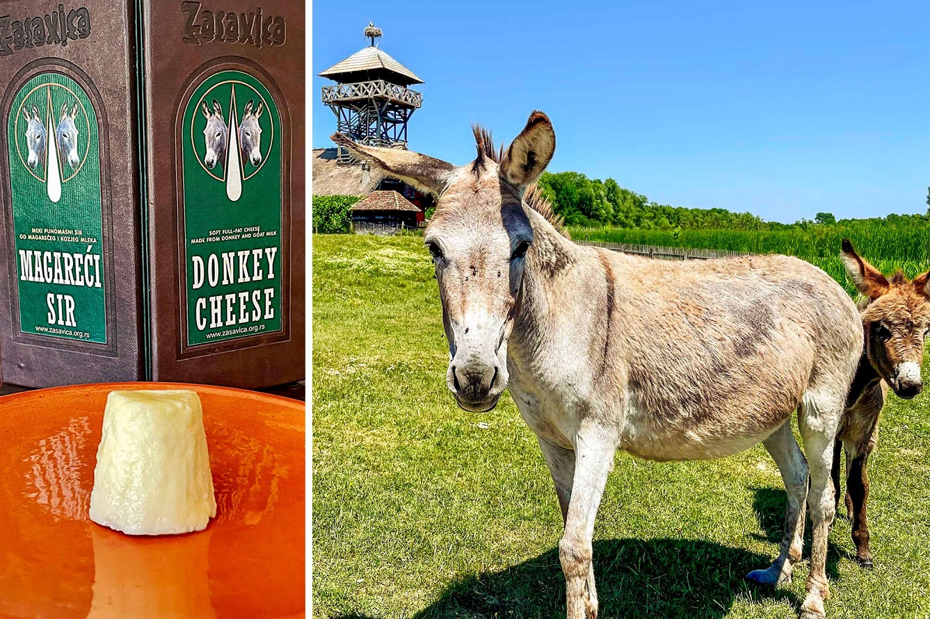 one-of-the-world's-most-expensive-cheeses-comes-from-rescued-donkeys