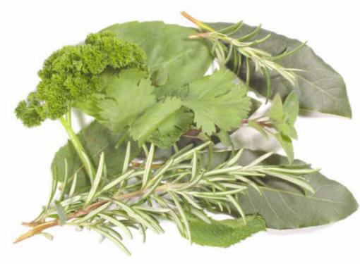 use-of-herbs